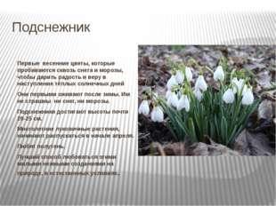 Подснежник Первые весенние цветы, которые пробиваются сквозь снега и морозы,