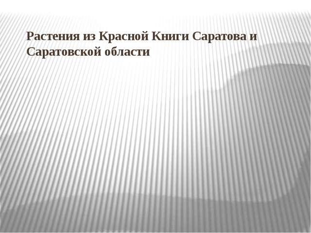 Растения из Красной Книги Саратова и Саратовской области
