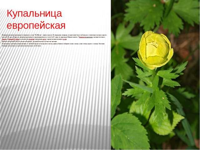 Купальница европейская Название растения происходит от немецкого слова 'Troll...