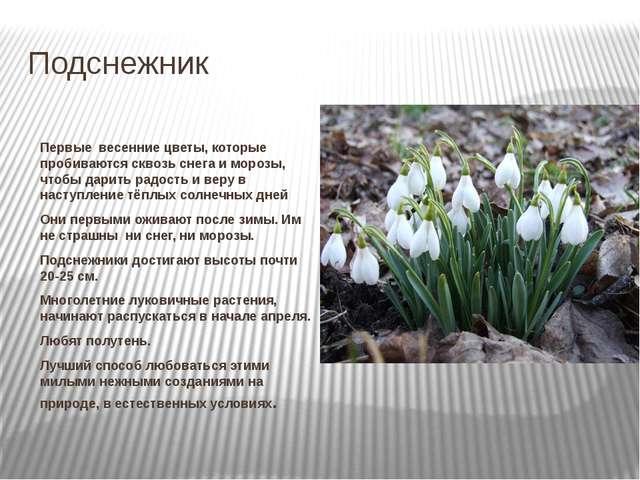 Подснежник Первые весенние цветы, которые пробиваются сквозь снега и морозы,...