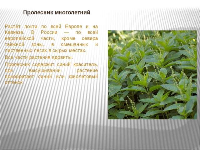 Пролесник многолетний Растёт почти по всей Европе и на Кавказе. В России — по...