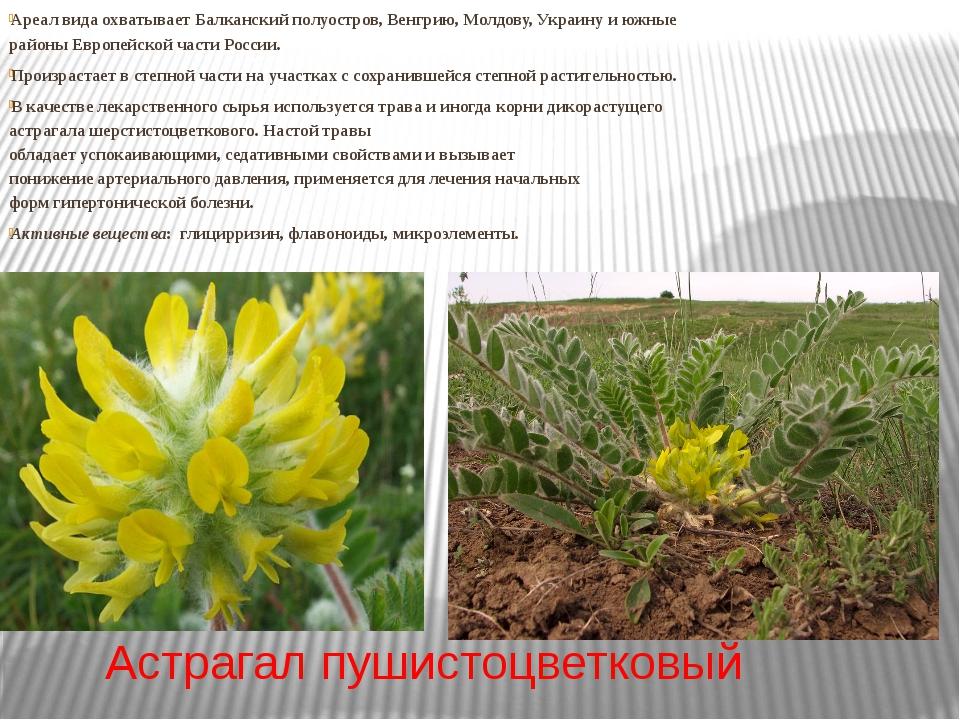 Астрагал пушистоцветковый Ареал вида охватывает Балканский полуостров, Венгри...