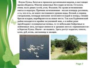 Фауна Кумы, богатая в прошлом различными видами, в настоящее время обеднела.