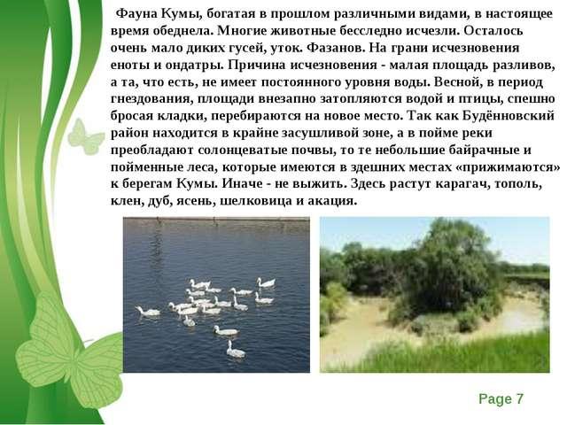 Фауна Кумы, богатая в прошлом различными видами, в настоящее время обеднела....