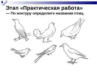 Этап «Практическая работа» — По контуру определите названия птиц.