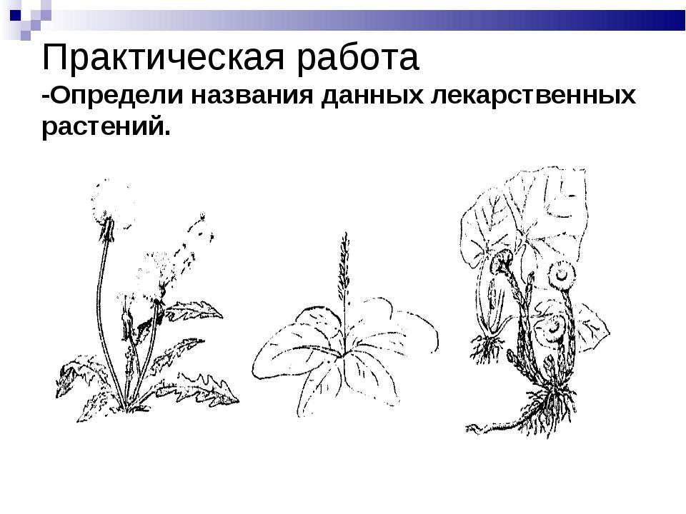 Практическая работа -Определи названия данных лекарственных растений.