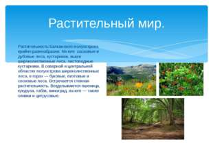 Растительный мир. Растительность Балканского полуострова крайне разнообразна.