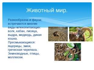 Животный мир. Разнообразна и фауна: встречаются многие виды млекопитающих: во