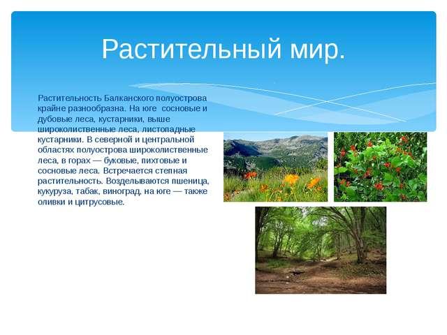 Растительный мир. Растительность Балканского полуострова крайне разнообразна....