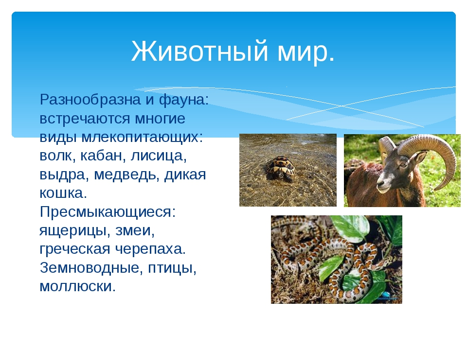 Животный мир. Разнообразна и фауна: встречаются многие виды млекопитающих: во...