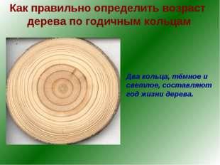 Как правильно определить возраст дерева по годичным кольцам Два кольца, тёмно