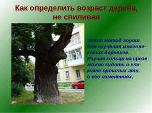 Как определить возраст дерева, не спиливая Этот метод хорош для изучения мног