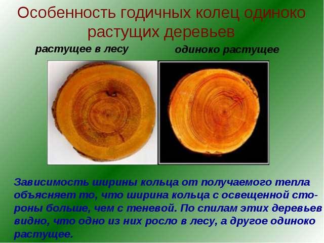 Особенность годичных колец одиноко растущих деревьев Зависимость ширины кольц...