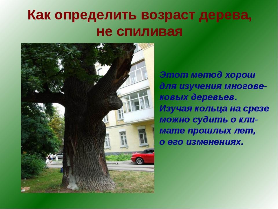 Как определить возраст дерева, не спиливая Этот метод хорош для изучения мног...