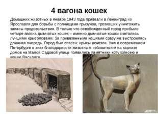 4 вагона кошек Домашних животных в январе 1943 года привезли в Ленинград из Я