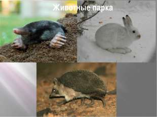 Животные парка