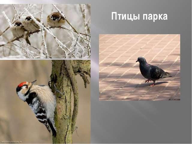 Птицы парка
