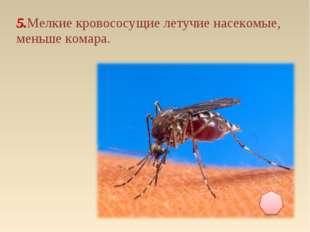 5.Мелкие кровососущие летучие насекомые, меньше комара.