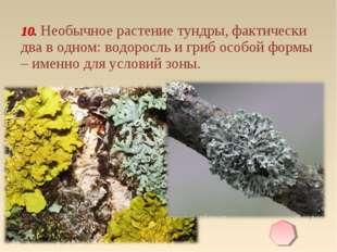 10. Необычное растение тундры, фактически два в одном: водоросль и гриб особо