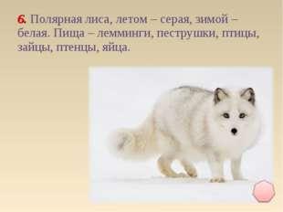 6. Полярная лиса, летом – серая, зимой – белая. Пища – лемминги, пеструшки, п