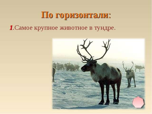 По горизонтали: 1.Самое крупное животное в тундре.
