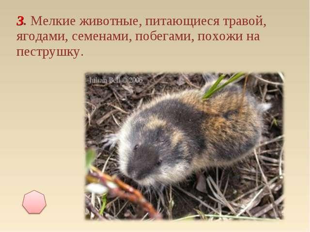 3. Мелкие животные, питающиеся травой, ягодами, семенами, побегами, похожи на...