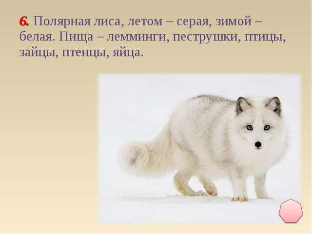 6. Полярная лиса, летом – серая, зимой – белая. Пища – лемминги, пеструшки, п...