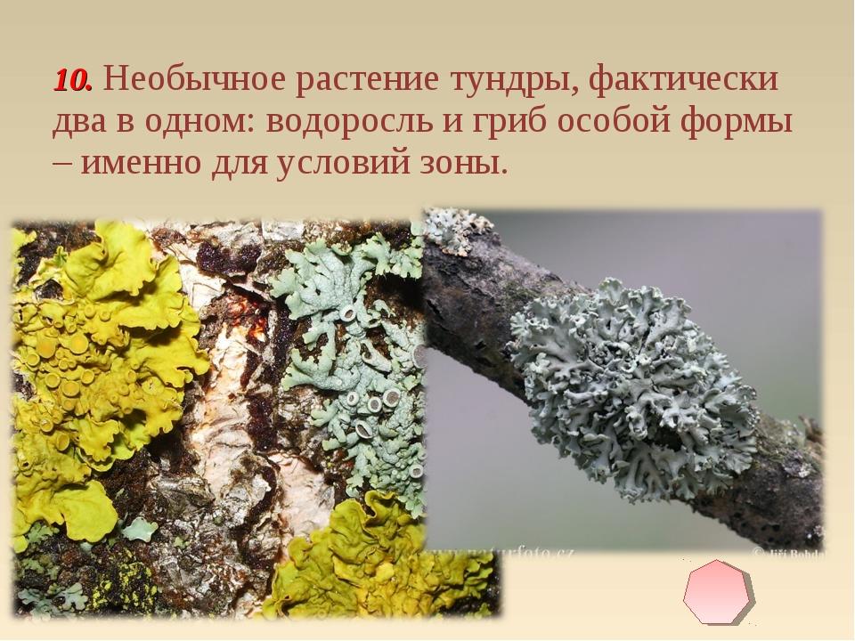 10. Необычное растение тундры, фактически два в одном: водоросль и гриб особо...