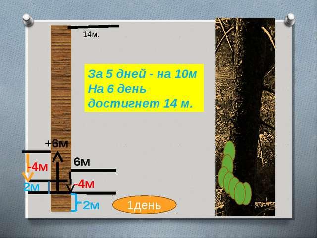 6м +6м -4м 2м -4м 14м. 1день За 5 дней - на 10м На 6 день достигнет 14 м. 2м