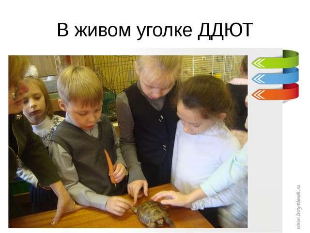 В живом уголке ДДЮТ