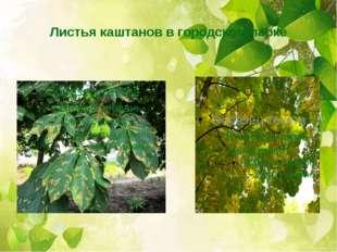 Листья каштанов в городском парке