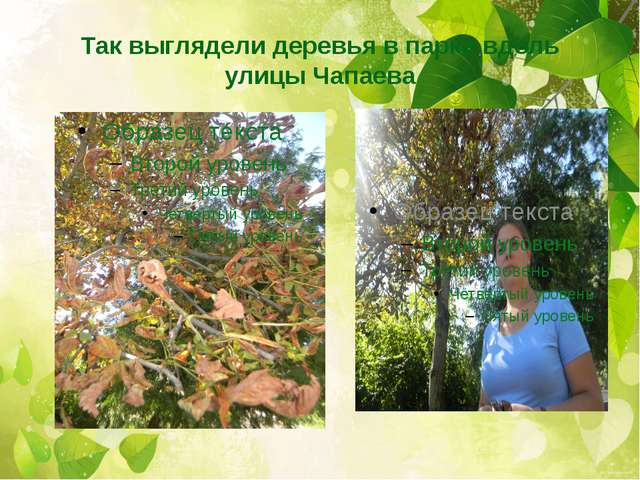 Так выглядели деревья в парке вдоль улицы Чапаева