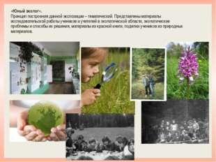 «Юный эколог». Принцип построения данной экспозиции – тематический. Представл