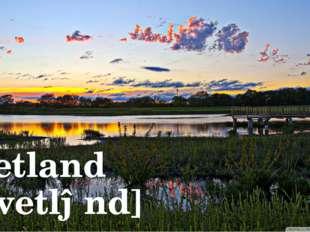 Wetland [ˈwetlənd]