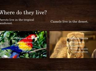 Where do they live? Parrots live in the tropical rainforest. Camels live in t