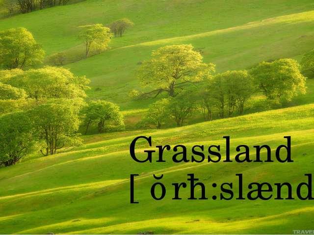Grassland [ˈɡrɑ:slænd]