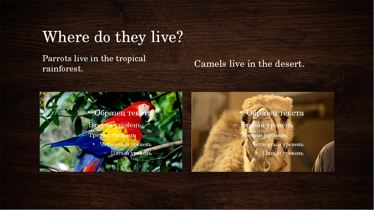 Where do they live? Parrots live in the tropical rainforest. Camels live in t...