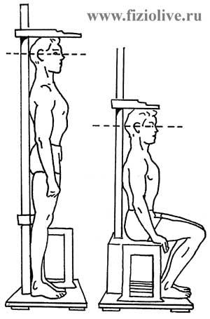 Измерение роста в положении стоя и сидя