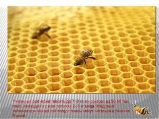 Пчелиный рой может весить до 7- 8 кг, он состоит из 50-60 тыс. пчел, имеющих