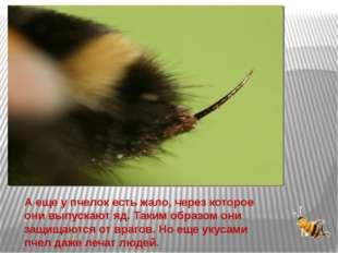 А еще у пчелок есть жало, через которое они выпускают яд. Таким образом они з