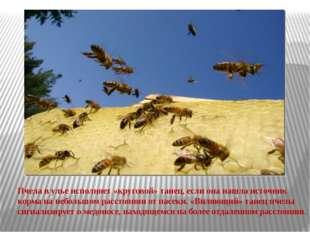 Пчела в улье исполняет «круговой» танец, если она нашла источник корма на неб