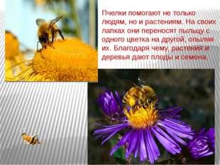Пчелки помогают не только людям, но и растениям. На своих лапках они перенося