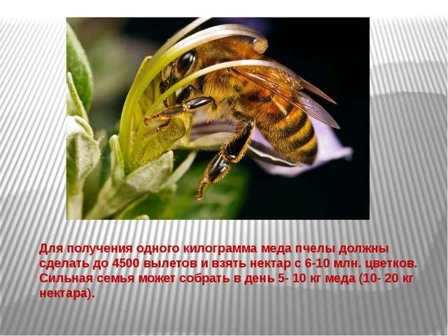 Для получения одного килограмма меда пчелы должны сделать до 4500 вылетов и в...