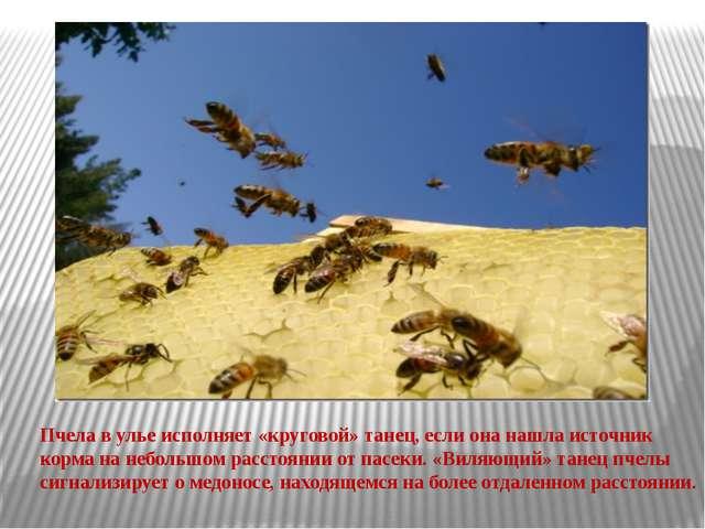 Пчела в улье исполняет «круговой» танец, если она нашла источник корма на неб...
