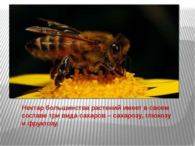 Нектар большинства растений имеет в своем составе три вида сахаров – сахарозу...