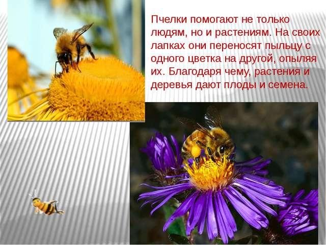 Пчелки помогают не только людям, но и растениям. На своих лапках они перенося...