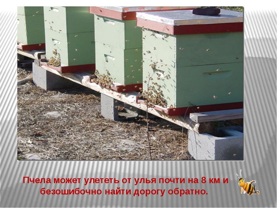 Пчела может улететь от улья почти на 8 км и безошибочно найти дорогу обратно.
