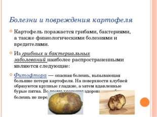 Болезни и повреждения картофеля Картофель поражается грибами, бактериями, а т