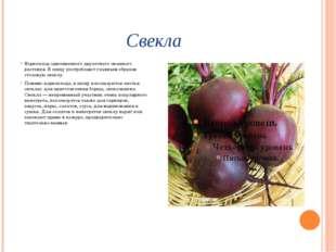 Свекла Корнеплод одноименного двулетнего овощного растения. В пищу употребляю