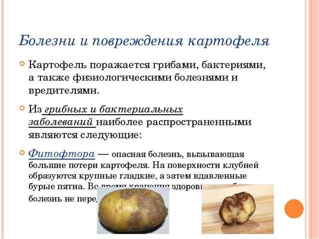 Болезни и повреждения картофеля Картофель поражается грибами, бактериями, а т...